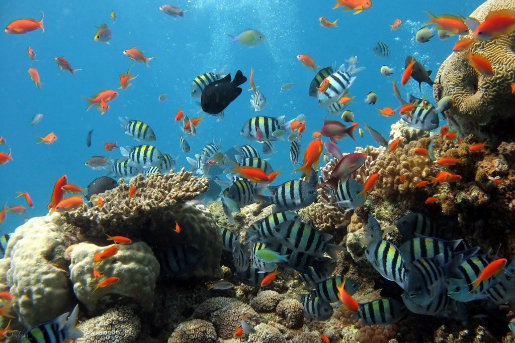 サンゴに優しい日焼け止めは本当に無害か?