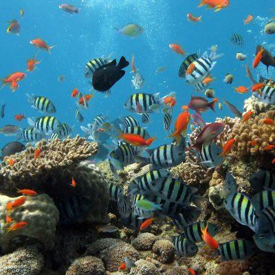 サンゴ礁に一番やさしい「究極の日焼け止め」