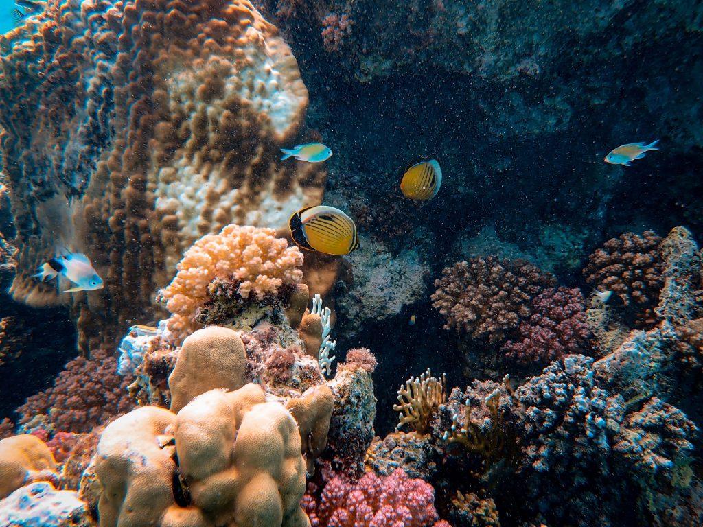 サンゴ礁に優しい日焼け止め
